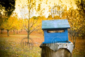 A rustic blue letterbox with a bright orange orchard behind it