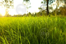 Getting eye level on lush green grass with the bright sun behind