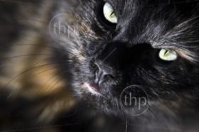 Close up of cat looking up at camera