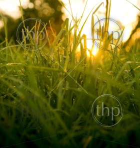 Sunrise or sunset as viewed from grass level