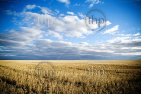 Wheat fields in rural Australia after harvest
