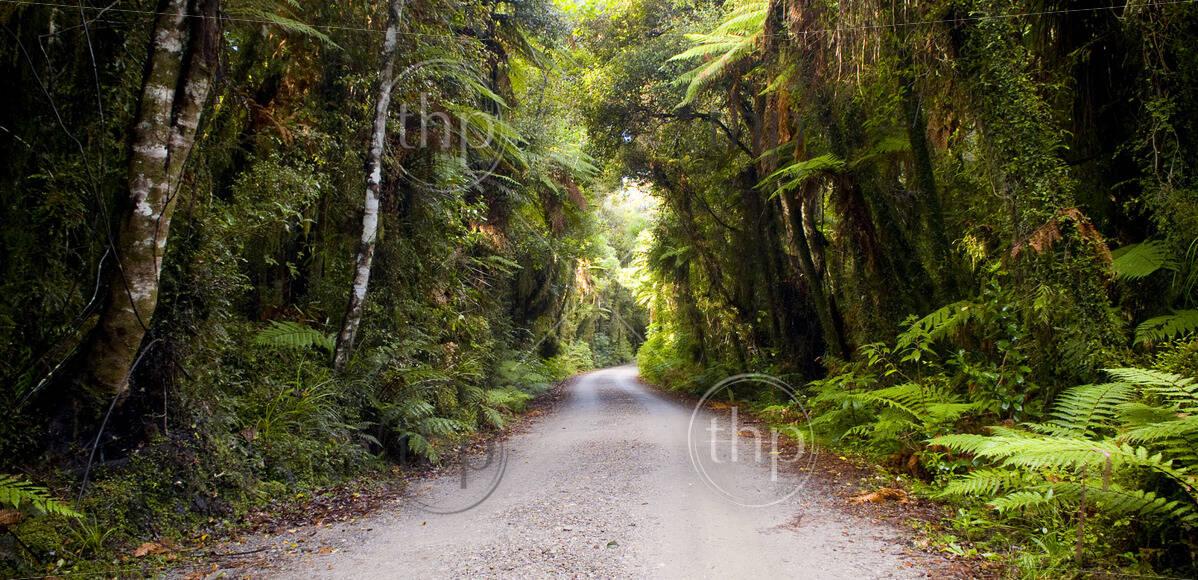 Dirt road going through thick, lush jungle
