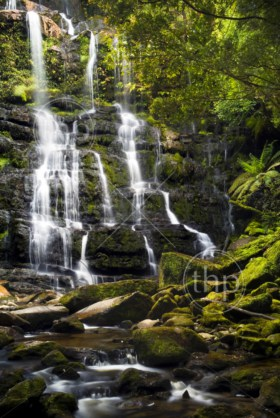 Nelson Falls in the beautiful Franklin Gordon Wild Rivers National Park, Tasmania, Australia