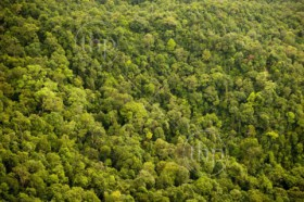 Aerial view of the forest or jungle canopy