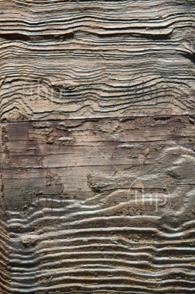 Texture of rough, weathered wood creates ornate lines