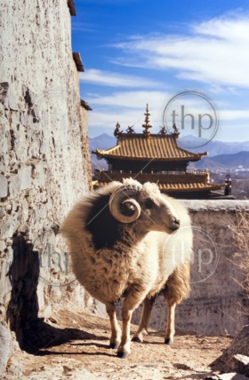 Tibetan temple with a ram in front