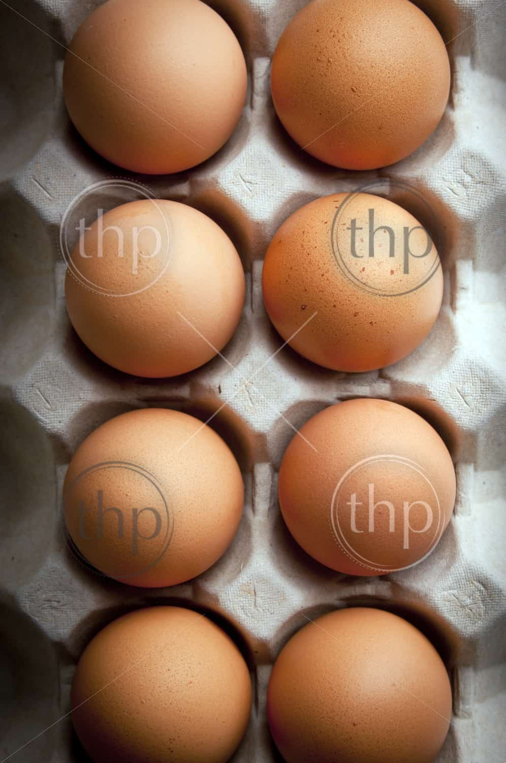 Fresh eggs in rows with moody lighting