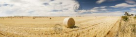 Harvest time with hay bales in the summer sun panorama