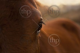 Beautiful close up of a horses eye in golden sunlight