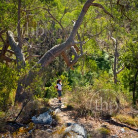 Young woman hiking in the Australian bush