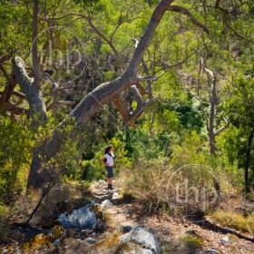 Young woman hiking in the Australian bush