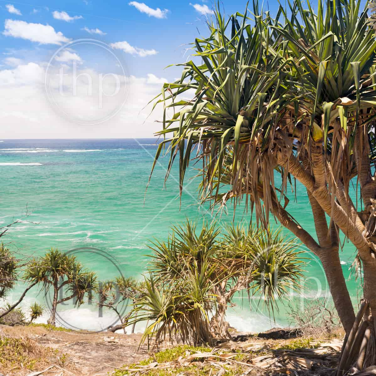 Palm Tree Island: Pandanus Palm Tree On Beach Of North Stradbroke Island