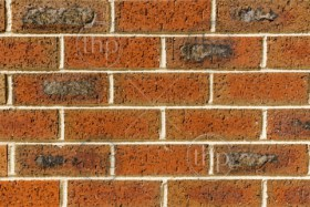 Red brick wall of new bricks and mortar as background texture