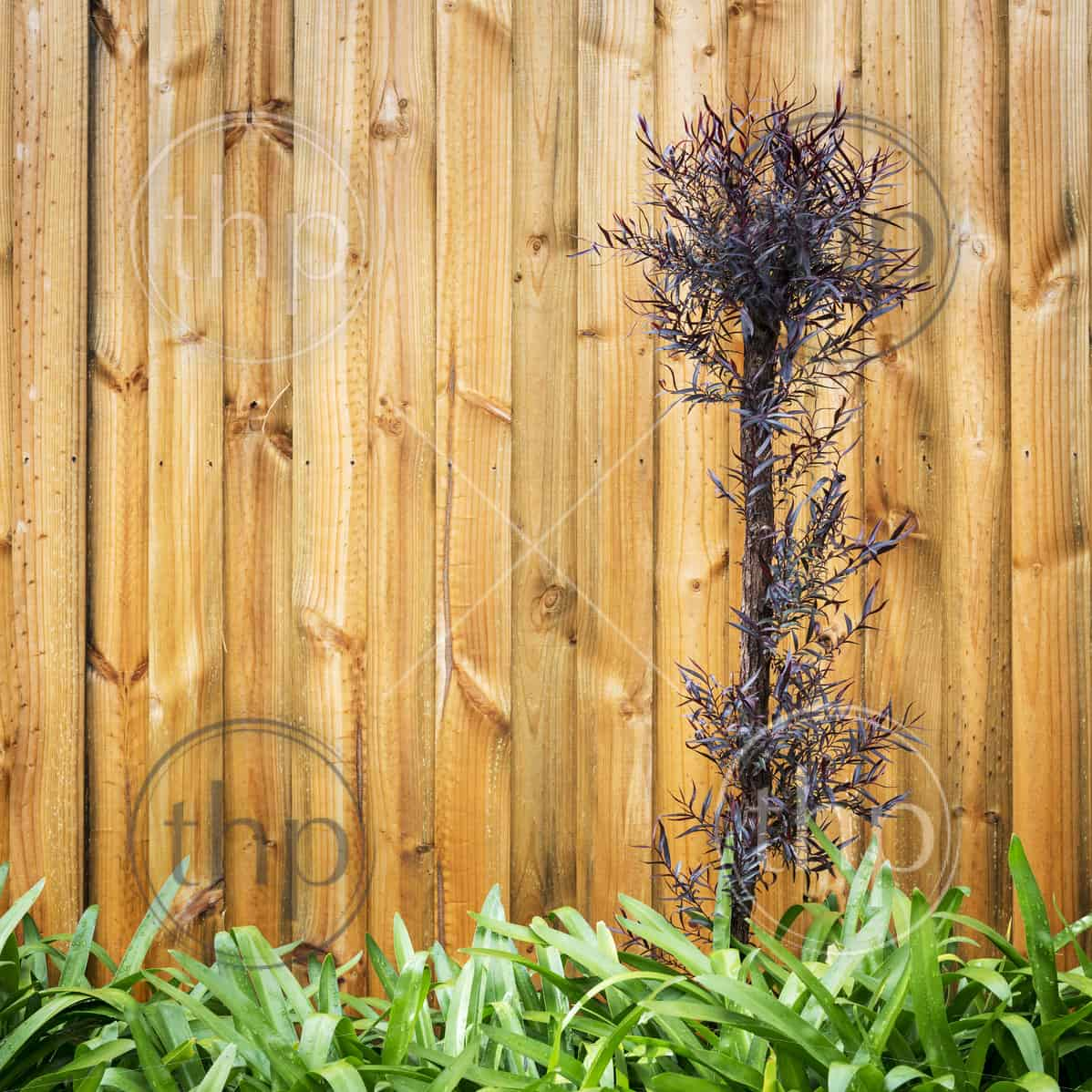 Landscape design background of multi coloured leaves and new wood panel fence