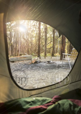Sunrise through the woods out camping as viewed from inside a tent