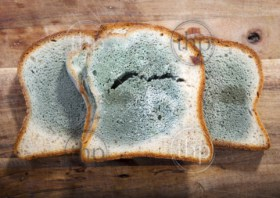 Mold growing rapidly on moldy bread in green and white spores