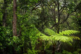 Rainforest landscape of ferns and trees wet with rain in the rainforest