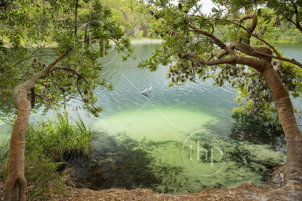 Blue Lake on North Stradbroke Island, Queensland, Australia is the perfect fresh water swimming hole