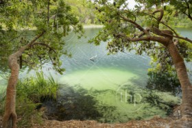 Blue Lake on North Stradbroke Island, Queensland, Australia is the perfect fresh water swimming hole