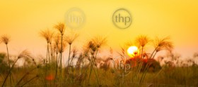 Classic Africa background with silhouetted African Elephant and long grass at sunset