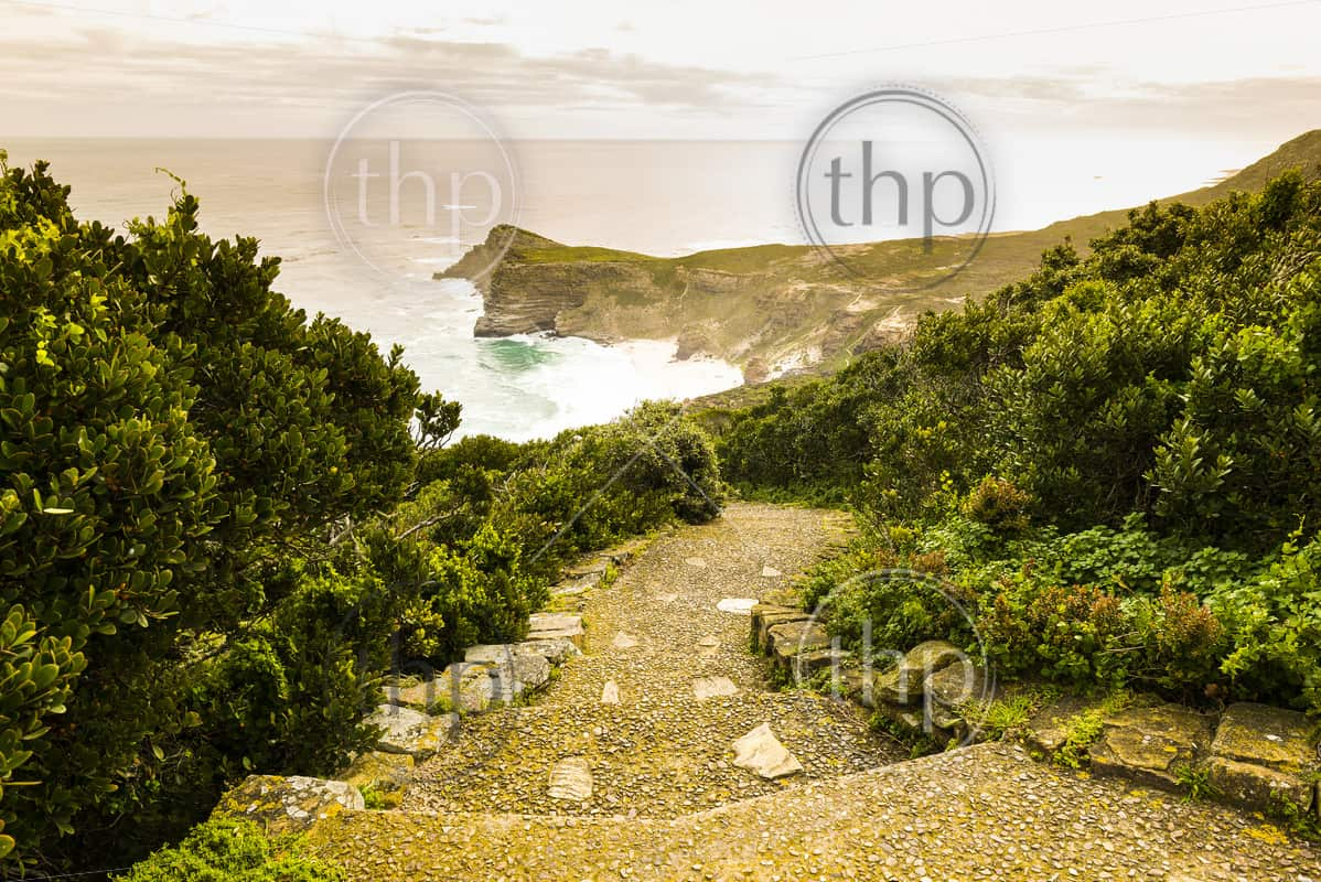 Pathway at dusk along the Cape of Good Hope, Western Cape, South Africa
