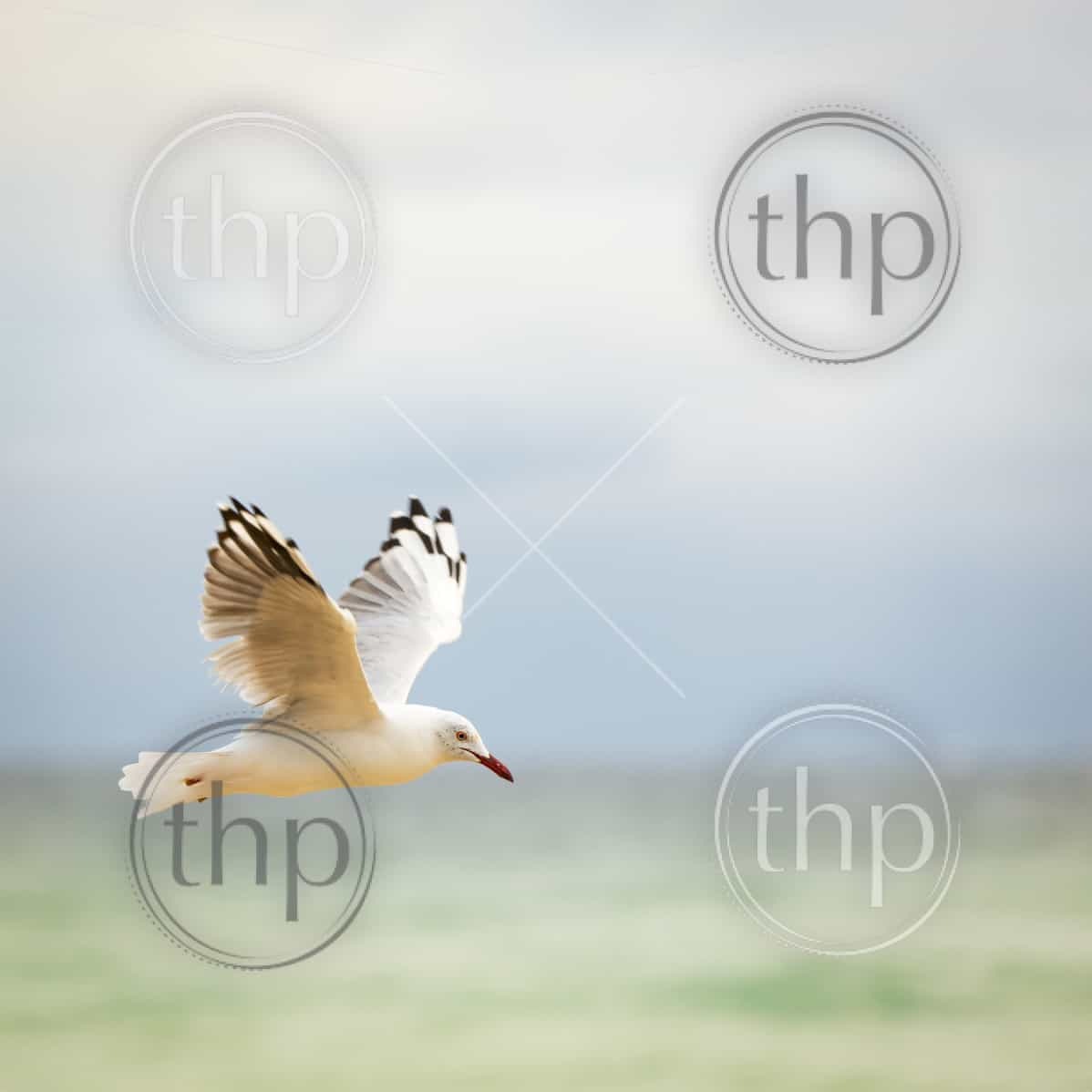 Beautiful seagull bird in flight over the ocean