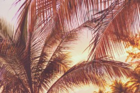 Retro holiday scene of a sunset on tropical beach palm trees