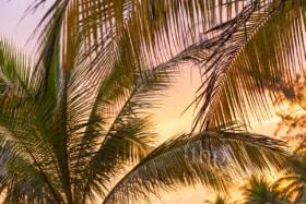 Tropical sunset light on beach palm tree fronds