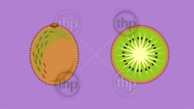 Kiwi fruit or kiwifruit whole and sliced in flat design vector style banner