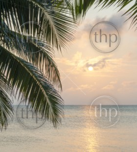 Tropical island background of palm trees at sunrise in the Caribbean