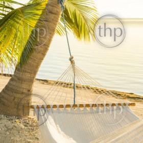 Peaceful vacation hammock on tropical palmtree beach