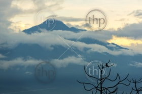 Tajumulco Volcano in Guatemala with bird silhouetted in a tree