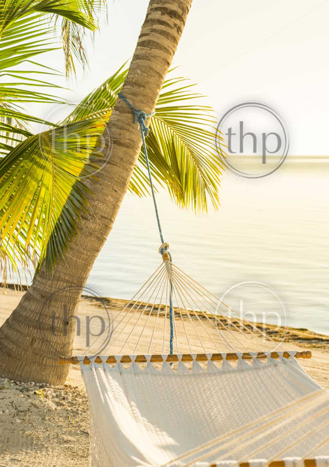 Tranquil vacation hammock on tropical palm beach