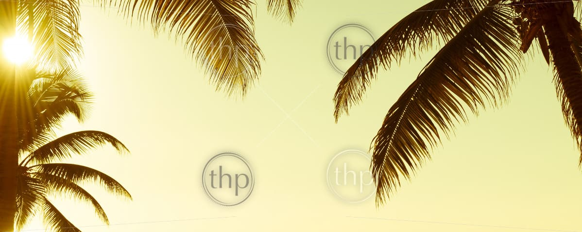 Tropical palmtree fronds under vintage sunset sky as background banner