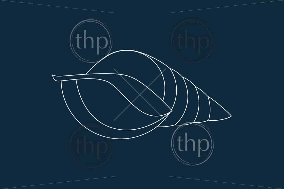 Line drawing vector of a seashell on blue